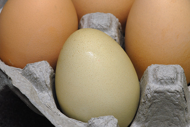 DSC_6786-Farmers-market-egg