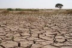 Algeria (chiar@s.) Tags: africa sahara algeria desert drought acacia hoggar crackedearth chiaras siccit