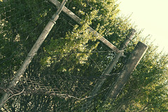 abondoned (kristin-kelly) Tags: california sunlight green abandoned fence wire alone barb posts shrubbery foresty