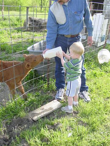nate feeding the calf