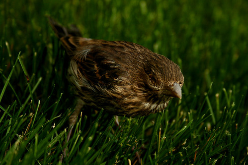 poorbird