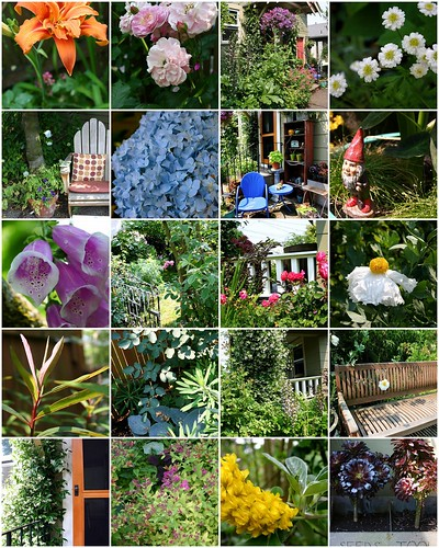 A walk through the garden: July '08