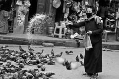 The Pigeon Feeder (mrdamcgowan) Tags: blackandwhite kathmandu pigeons birds nepal street feedingthebirds