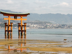 Itsukushima XXIII (Douguerreotype) Tags: japan miyajima water sea beach torii gate red deer animal wild nature buddhist shrine temple