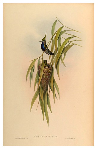 011-An introduction to the Trochilidae or family of humming-birds- Vol 4- 1861-John Gould