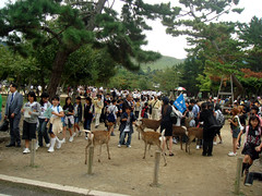 School Kids in Nara Park with the Deers (Namisan) Tags: