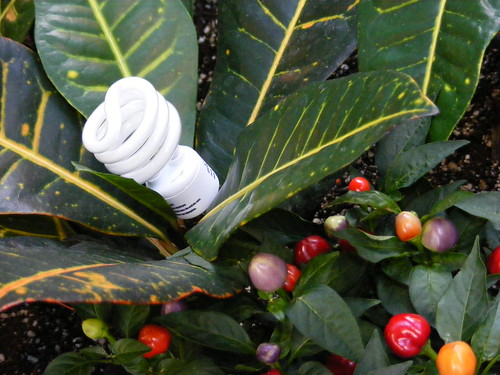 Bulb in Plant