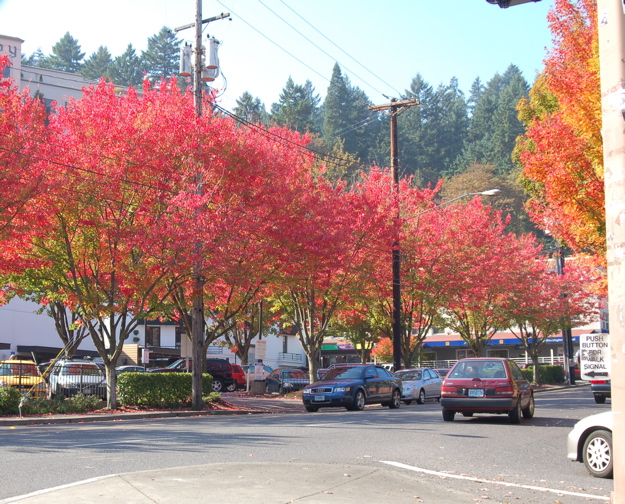 corner_23rd_burnside_red_trees2