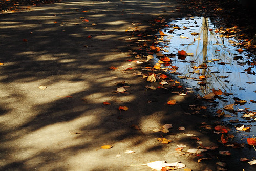 Fall Reflections 4159