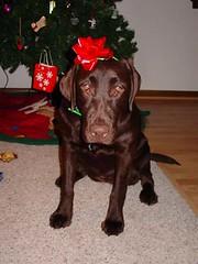 Christmas Present Lab: Dakota
