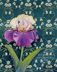 Tan and Purple Iris on Green Print by Elizabeth Ruffing