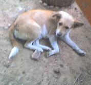 Kinship Circle - 2007-10-29 - 11 - Help Benevolent Society For Animals In Ghana