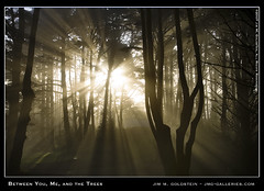 Between You, Me and the Trees (jimgoldstein) Tags: sanfrancisco california sunlight tree fog landscape photo bravo fv10 sunbeam crepuscular naturesfinest blueribbonwinner montereypine magicdonkey outstandingshots jmggalleries anawesomeshot aplusphoto jimmgoldstein diamondclassphotographer flickrdiamond