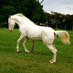 Horse - Bluverdose = Overdose de Blu !!!