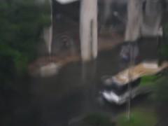 Lluvia en noviembre 28 07 006 (Halcab) Tags: cali lluvia paisajeurbano ensayos