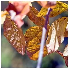 IMG_4548rw (hz536n/George Thomas) Tags: autumn trees fall oklahoma stillwater 2007 canon30d canonef70200mmf4lusm pse5