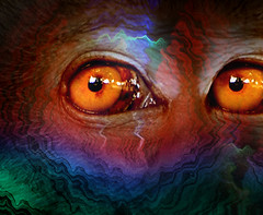 This is what an extreme hangover is like after the celebrations (williamcho) Tags: abstract digital photoshop scary eyes colorful waves pattern manipulation stare looks imaging filters