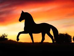 Last light of day (~The Mandarin~) Tags: light sunset horse clouds caballo cheval miniature darkness dusk paso cavalo silhoutte diorama peruvian equus breyer peruvianpaso stablemate modelhorse pasoperuano anawesomeshot
