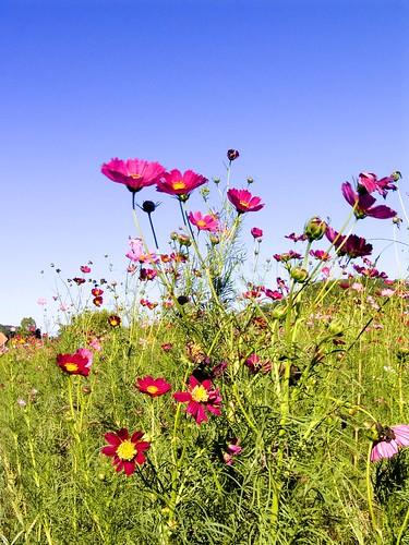 Georgia Wild Flowers