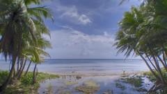 Sella Bay (Convict J-man) Tags: ocean sea sky tree beach river geotagged island nikon pacific coconut palm jungle shore tropical tropics tranquil hdr guam marianas photomatix sellabay jpgmagcom jeremyfarr geo:lat=13328833 geo:lon=144651450