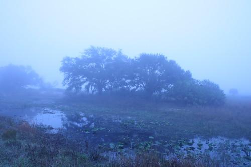 kissimmee prairie state park 1-12-08 235