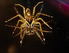 Unidentified spider on CD DSC_7007