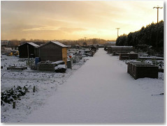 snowy allotment site 2