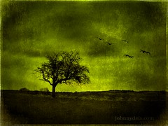 Last Tree Standing (JohnnyDeis) Tags: old longexposure tree green bird art texture nature birds topv111 photoshop germany spring emotion fear extreme style olympus oldschool topv222 textures depression 100views strong 300views depressed topf10 topf35 limburg e500 strongcolors topf30 olympuse500 topf40 topf45 10faves views100 40faves mywinners abigfave 45faves favemegroup5 johnnydeis flickrestrellas