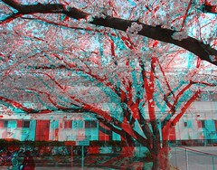 3D-anaglyph-R0012014