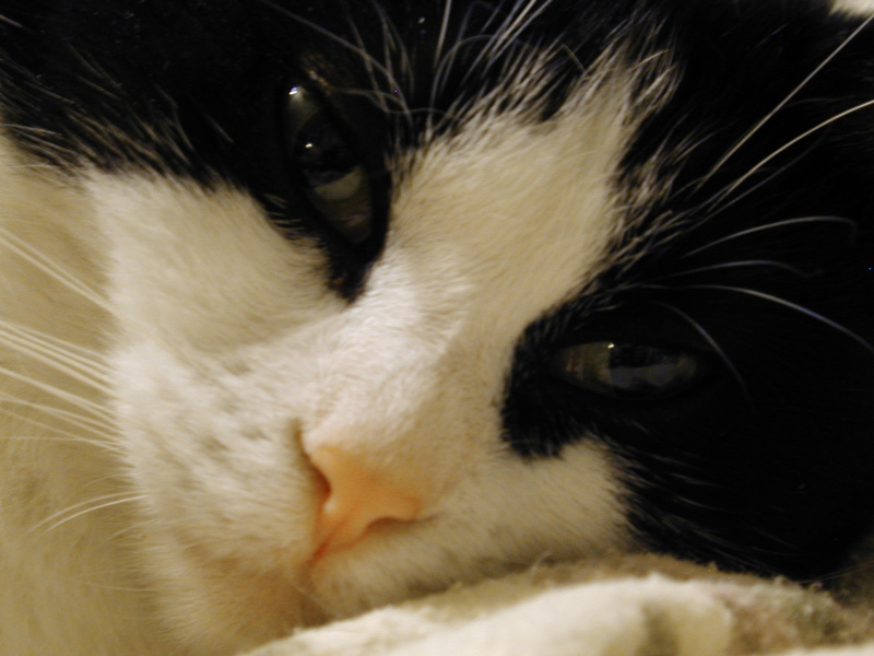 Maus Close-Up