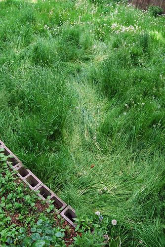 Crop Circle Path