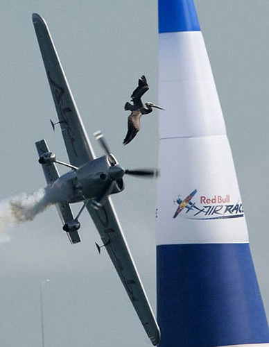 redbull-air-racing-pelicano