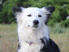 (VonB dogphotos) Tags: dog chien dogs cane maastricht hond perro hund vonb limburg natuurmonumenten pietersberg honden losloopgebied euregionaal