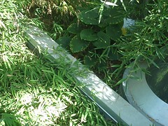 SCS_051007-111.JPG (wonderK) Tags: greenroof californiasciencecenter morphosis sciencecenterschool