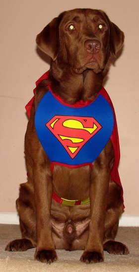 Super Mocha