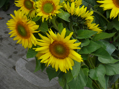 102707sunflower