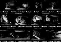 fun time under the futon (saikiishiki) Tags: blue bw dog white playing black love film k analog darkroom grey play asahi pentax k1000 gray weimaraner contactsheet analogue  negatives 1000 weimaraners  weim greyghost bwfilm  squidoo blueweimaraner weimie rolyn chanhi weimaranerart  bwphotogragh handdevelopedfilm handdevelopedbwprint handdevelopedbwphotograph handdevelopednegative waimarana blueweim weimaranerartist weimaranerphotography weimaranerphotographer saikiishiki