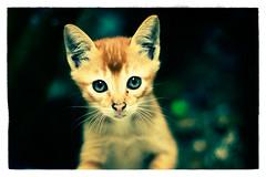 kitten bites