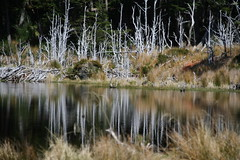 lake reflections (angela7dreams) Tags: world chile travel cruise trees winter patagonia color reflection green slr art tourism southamerica nature wet water ecology argentina argentine beauty digital forest canon tierradelfuego outside outdoors eos rebel xt photo interesting woods december image pics culture conservation beaver glacier adventure land environment canonrebel organic pia excursion global 2007 aventura beaglechannel capehorn yaman marinelli straitofmagellan somerightsreserved angelasevin cabodehornos diamondclassphotographer bestnaturetnc07 earthslide crucerosaustralis earthslide4 photocontesttnc09 photocontesttnc10 photocontesttnc11