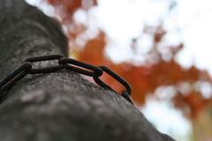Dragon (Blackcatatheart) Tags: tree fall leaf chain bark prespective