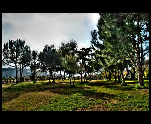 Procidda - strada panoramica - foto di Gabriele Scotto di Fasano