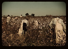 Day laborers picking cotton near Clarksdale, Miss. (LOC)