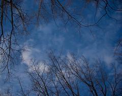Dernier Repos - Last resting place (Luc Deveault) Tags: blue sky canada tree nature plante heaven branch peace quebec bleu ciel qubec rest luc nuage arbre repose paradis paix branche coloud photosafarimtl photoquebec deveault psm190108 lucdeveault