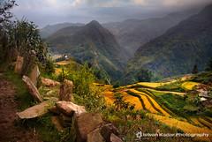 Sa Pa Rice Valley (fesign) Tags: vietnam ricefield sapa riceterraces naturesfinest fesign terracedfields istvankadar hoanglienson laocaiprovince absolutelystunningscapes