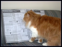 Toby Help Me With The Directions Please (iwork4toby) Tags: red cat persian persiancat flickrsbest redpersian lolcats luv2explore