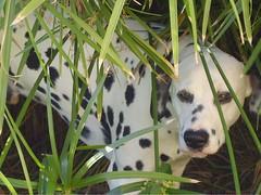 dalmatian like an egyptian (Jama20125) Tags: dog lighthouse cane steel dreams papyrus dalmatian dalmata