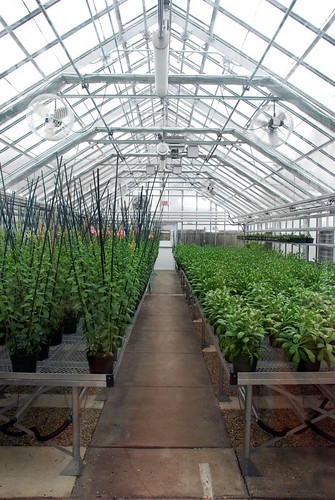 The Seedling Greenhouse