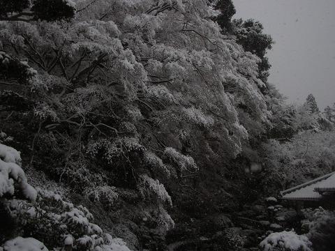 当麻寺(雪景色)-08