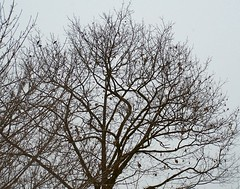 BirdsinTree_31908