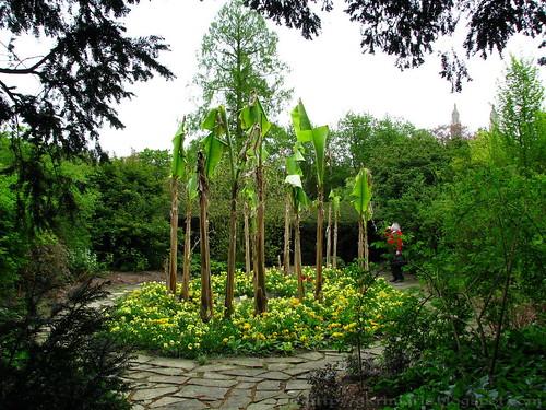 Clare College's gardens